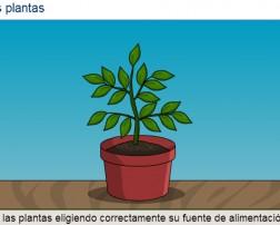 act_de_plantas