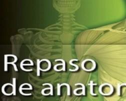 gray_anatomia copia