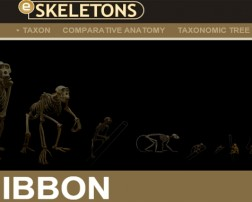 skeletons_portal copia