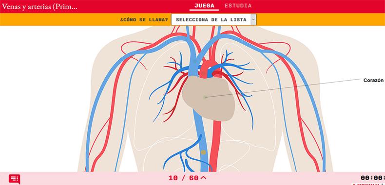 12 Juegos del aparato circulatorio en Didactalia