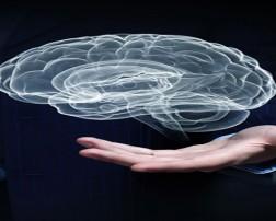 El término Neurociencia refleja la naturaleza interdisciplinaria de la moderna investigación del cerebro (Duque-Parra, 2001a), la cual incluye múltiples disciplinas aparentemente disímiles entre sí (Duque-Parra, 2001b), además de una amplia gama de técnicas seguramente mucho más diversas que cualquier otra rama de la ciencia (Blakemore, 1986) y con las que se puede contribuir a la comprensión del sistema nervioso (Duque-Parra, 2001b).